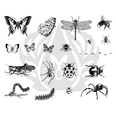 DSS-113 Bugs